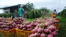 Nhật dự kiến kiểm tra 100% đối với nông sản Việt do dư lượng thuốc bảo vệ thực vật