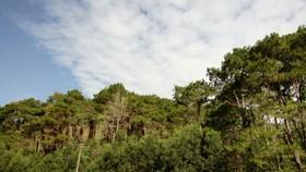 Diện tích rừng phòng hộ ở huyện Ba Tơ, Quảng Ngãi