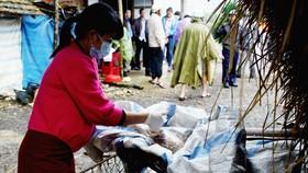 Cán bộ Chi cục Chăn nuôi và Thú y lấy mẫu vịt chết trên sông Phủ