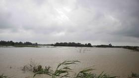 Mưa lũ gây thiệt hại trên 200 tỷ đồng, Quảng Ngãi kiến nghị khắc phục sau mưa lũ