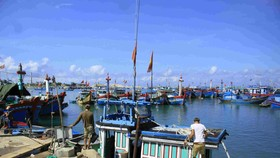 Phát hiện nhiều tàu cá tận diệt thủy sản trong Khu bảo tồn biển Lý Sơn (Quảng Ngãi)