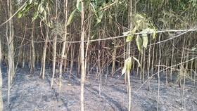 Lại xảy ra liên tiếp 2 vụ cháy rừng tại huyện Bình Sơn