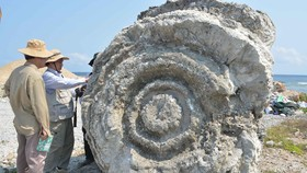 Hội thảo quốc tế về giá trị di sản công viên địa chất Lý Sơn-Sa Huỳnh