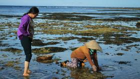 Đề nghị đầu tư 3,5 tỷ đồng phục vụ Khu bảo tồn biển Lý Sơn