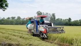 Trồng lúa công nghệ cao