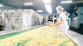 Việt Nam - Ấn Độ định hướng chung về thị trường điều thế giới
