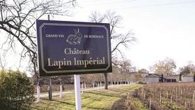 Một cánh đồng nho của château Thỏ Đế Vương