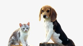 河內市:狗與貓飼養者必須向鄉、坊、市鎮人委會辦理登記手續,並在住所範圍內看管。(示意圖源:互聯網)