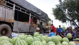 物流費用佔果蔬價格近三成。(示意圖源:互聯網)