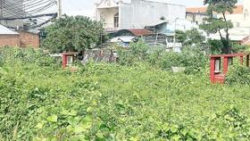 墳地區裡的野草、樹木叢生,成為蛇、老鼠和蚊子繁衍的溫床。