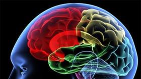 美國一項新研究顯示,成年女性的大腦會比同齡男性的大腦年輕大約3歲。(示意圖源:互聯網)