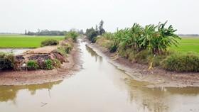 在檳椥、隆安和前江等省,海水開始入侵田野,導致生產和生活遇上困難。(示意圖源:互聯網)