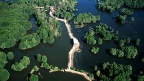 圖為本市芹耶縣的世界生物圈保護區一瞥。(圖源:Vietnam Forestry)