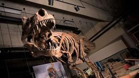 恐龍骨骼。(圖源:互聯網)