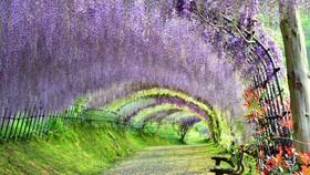 河內藤園一瞥。(圖源:互聯網)