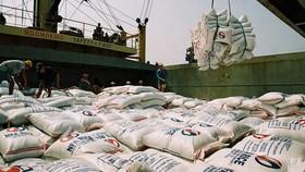 大米出口是九龍江平原的一大優勢。