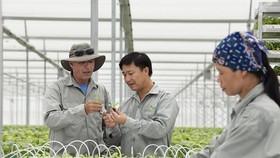 VinEco高科技農場勞工在悉心聽取外國專家講解農業技術。(圖源:耀玉)
