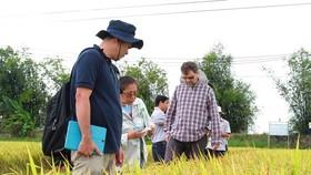 外國專家參觀我國的稻田。(圖源:貴玉)