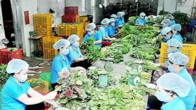 本市一農業合作社。(圖源:高昇)