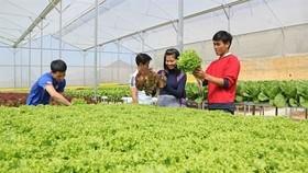 遊客參觀古芝縣無公害蔬菜農場。(圖源:越通社)