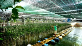 本市致力推動農業生態旅遊模式。(圖源:清海)