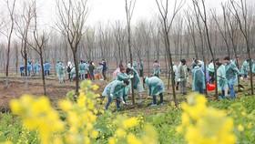 研究指出,全球植樹造林潛力大有望儲存大部分碳排放。(示意圖源:互聯網)