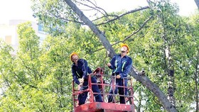 綠化公司人員在第三郡修剪樹椏。
