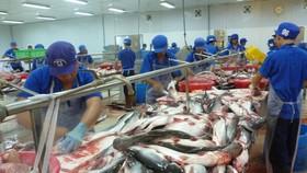 查魚價格大幅下降,導致不少養殖戶虧損嚴重。(示意圖源:互聯網)