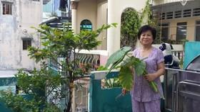 阮氏秋香在陽台種植蔬菜。