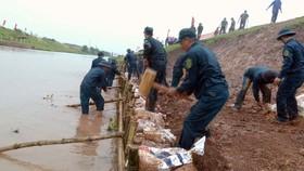 志願隊員緊急出動修復堤壩。(圖源:PV)