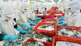 今年上半年,越南蝦類出口額達14億美元,同比減少12%。(圖源:互聯網)