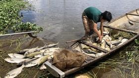 養殖業者把死魚撈上岸。(圖源:青團)