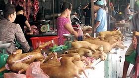 本市勸告民眾不要吃狗肉。(示意圖源:互聯網)