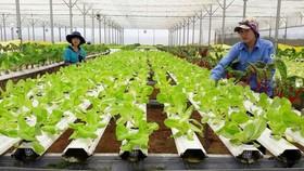 古芝縣發展高科技農業。(圖源:互聯網)