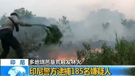 印尼警方已逮捕185名在印尼蘇門答臘島和加里曼丹島燒芭墾荒觸發林火的嫌疑人。(圖源:CCTV視頻截圖)