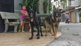 專家們勸告,養犬者帶寵物出門時要給狗狗戴上嘴套。