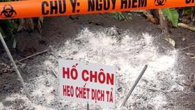 An Giang, địa phương thứ 2 ở ĐBSCL xuất hiện dịch tả heo châu Phi