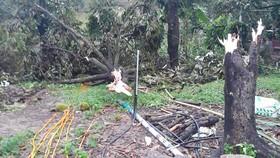 Nhiều vườn sầu riêng đặc sản bị lốc xoáy tàn phá nặng nề