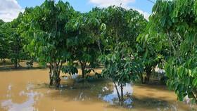 Nước lũ gây ngập nặng ở TP Bảo Lộc