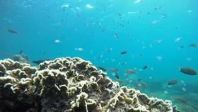 Khu bảo tồn biển Hòn Cau trước nguy cơ bị biến thành nơi xả thải bùn thải từ dự án nhiệt điện than