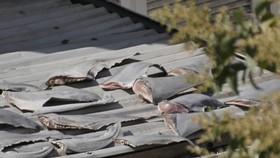 Bộ Công Thương yêu cầu làm rõ thông tin vụ phơi vây cá mập trên mái nhà