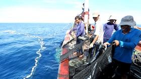 Để tránh rào cản xuất khẩu, khai thác hải sản cần có nguồn gốc hợp pháp. Ảnh: VNE