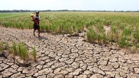 Cảnh báo: Thiếu hụt lượng mưa ngay trong mùa mưa năm 2018
