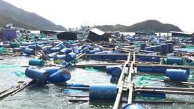 51 nhà sập, 46 thuyền, 99 lồng bè chìm do bão số 9
