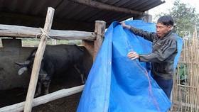Rét đậm, rét hại có nguy cơ ảnh hưởng xấu đến sản xuất chăn nuôi ở nhiều khu vực
