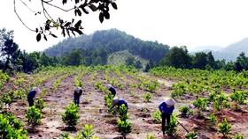 Hơn 28.000 tỷ đồng bảo vệ rừng Tây Nguyên