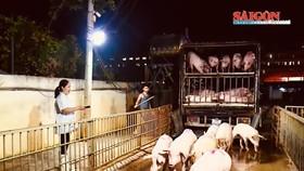 TPHCM tổng lực kiểm soát chặt nguồn thịt heo