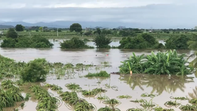 Hàng ngàn héc ta cây thanh long bị ngập úng.