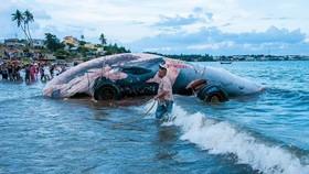 """Xác cá ông nặng khoảng 15 tấn, dài 14m """"lụy"""" trên biển."""