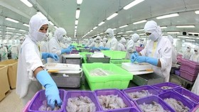  Vietnamese shrimp producers need to build detailed strategies for every market. Specifically, it's necessary to pay attention to the trends and habits of consumers in order to issue specific plans to develop business effectively. (Photo: VNS)